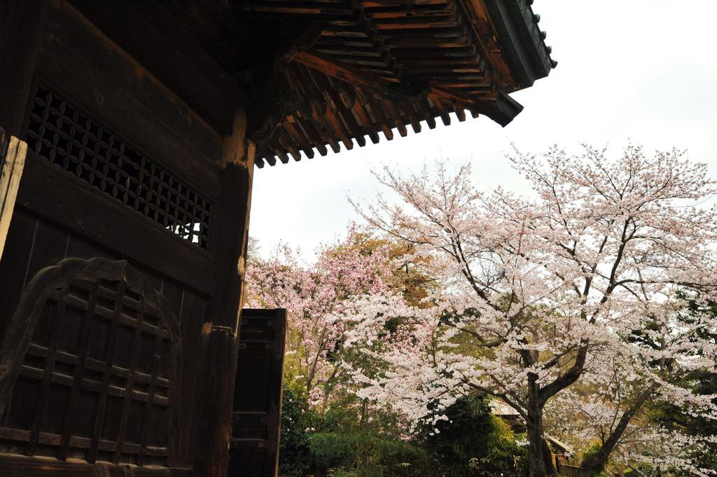 20110410_kenchoji3