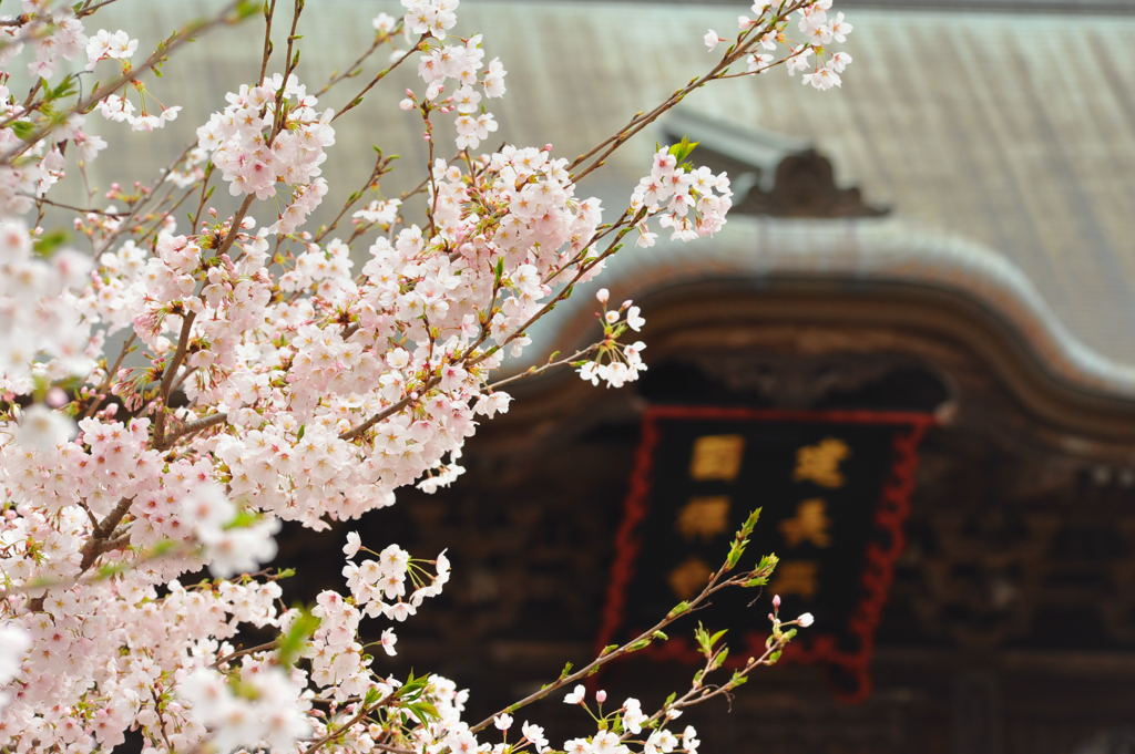 20110410_kenchoji5
