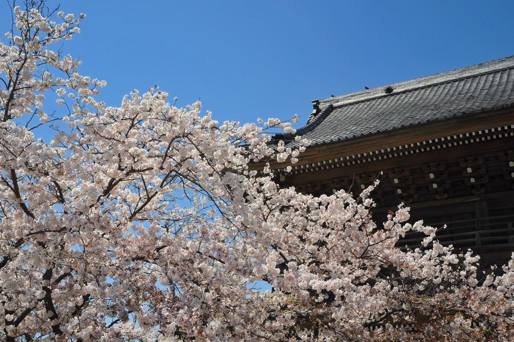 20110413_komyoji3_2