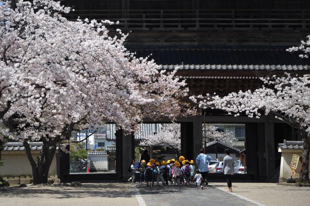 20110413_komyoji4