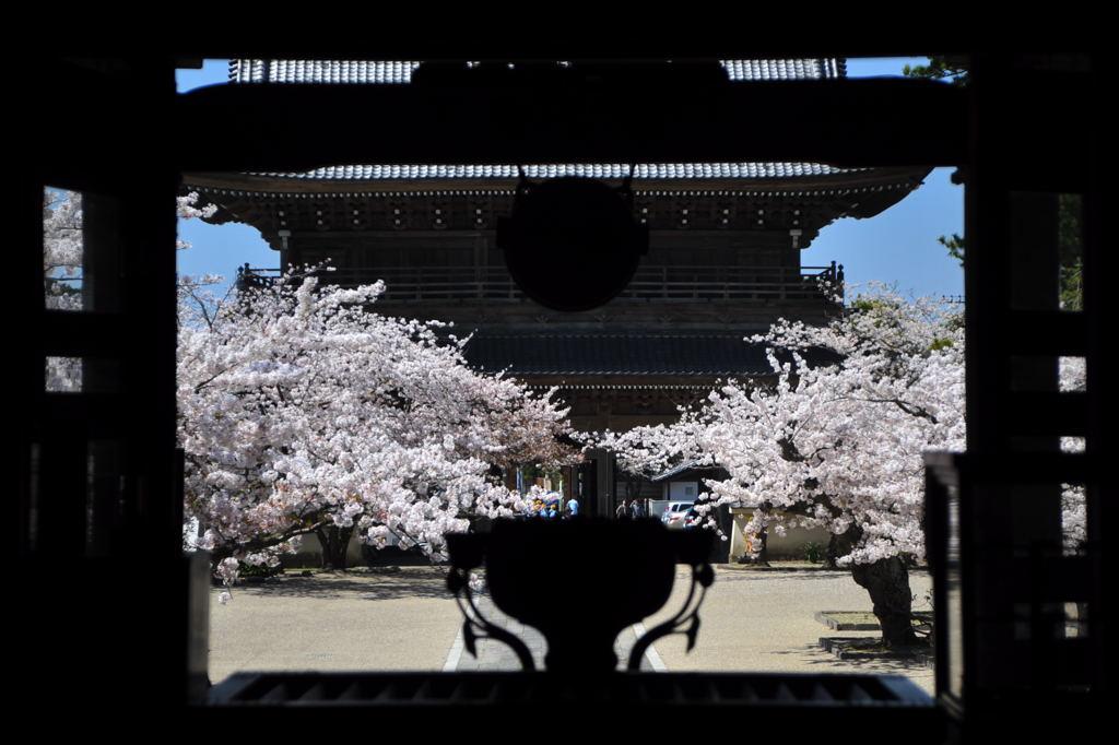 20110413_komyoji5