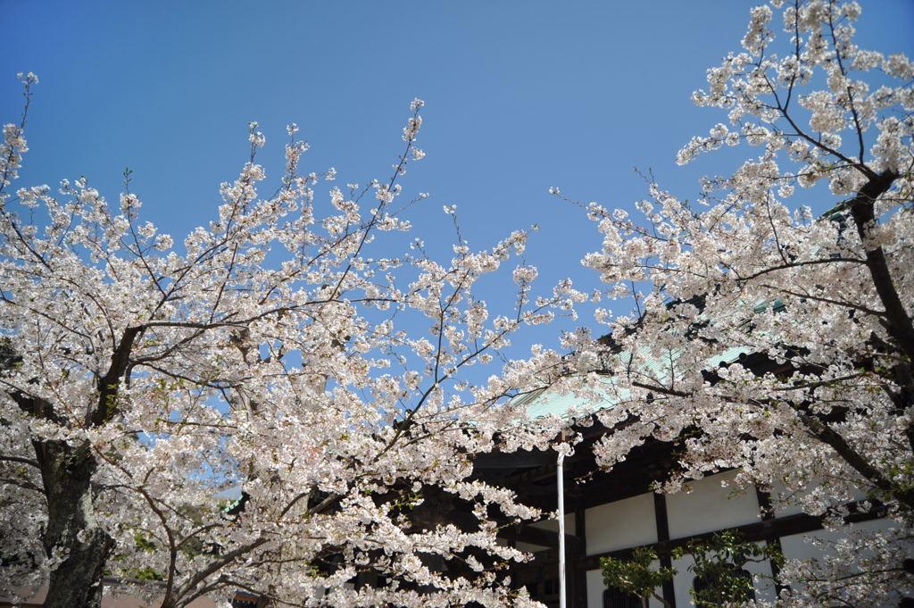 20110413_komyoji6