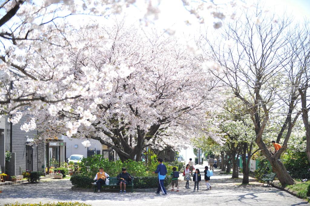 20110413_shichirigahama3