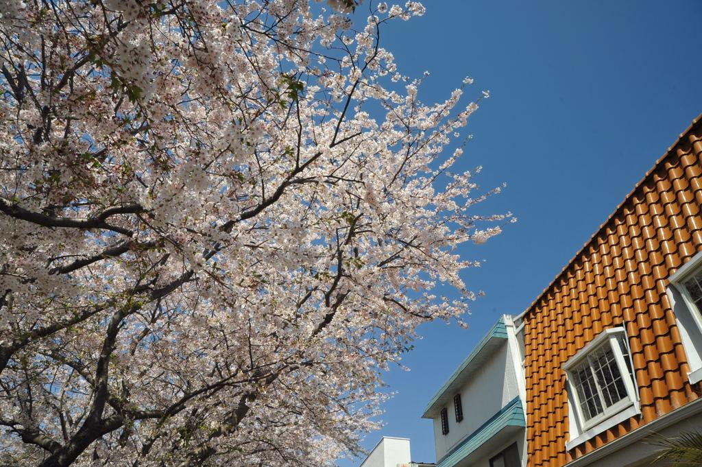 20110413_shichirigahama5