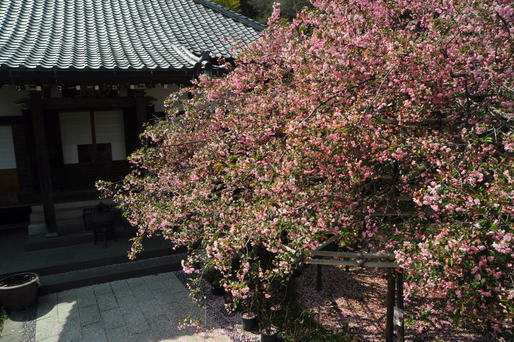 20110417_kosokuji1