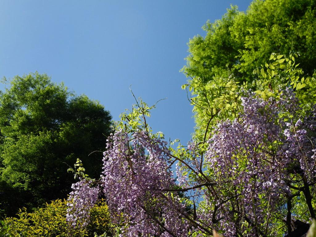 20110428_engakuji6