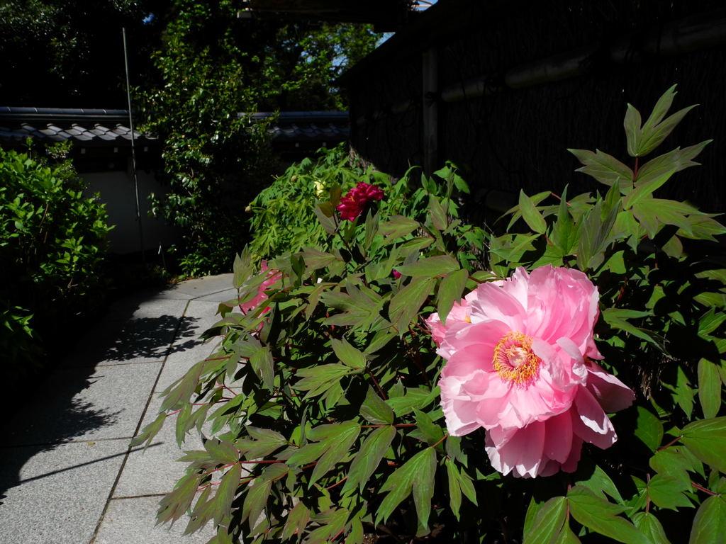 20110428_engakuji7