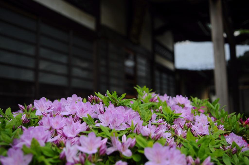 20110430_butsugyoji2