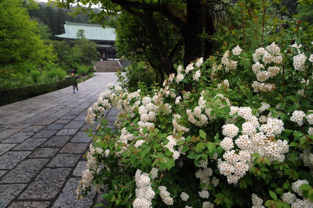 20110507_ryuhouji2