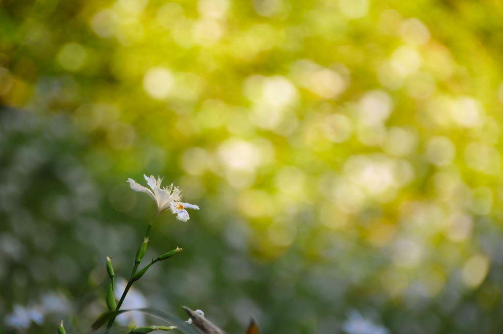 20110515_kamakurayama2