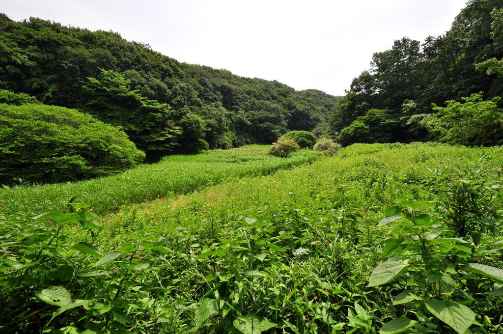 20110605_kurakubo2
