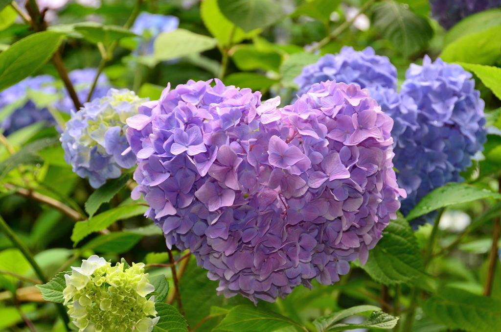 20110619_kaizoji4